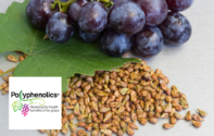 New cholesterol treatment guidelines are a huge  opportunity for nutraceuticals industry